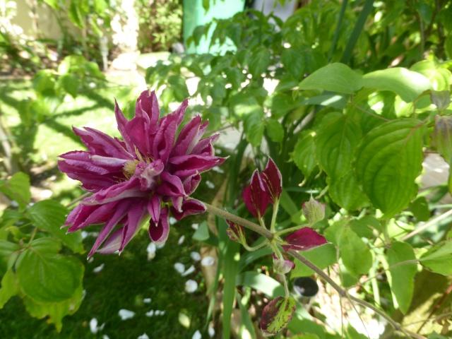 le joli mois de mai des fous jardiniers - Page 8 28-05-18