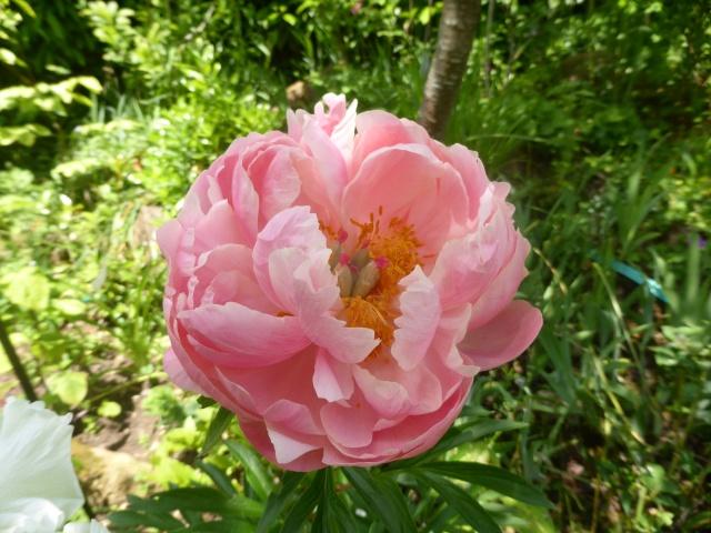 le joli mois de mai des fous jardiniers - Page 8 28-05-19