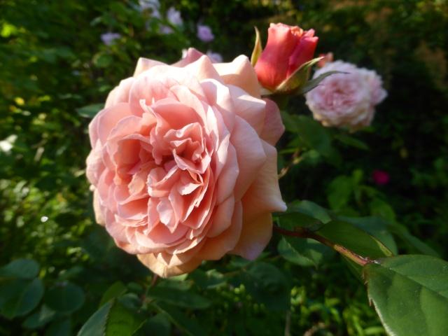 le joli mois de mai des fous jardiniers - Page 8 28-05-22