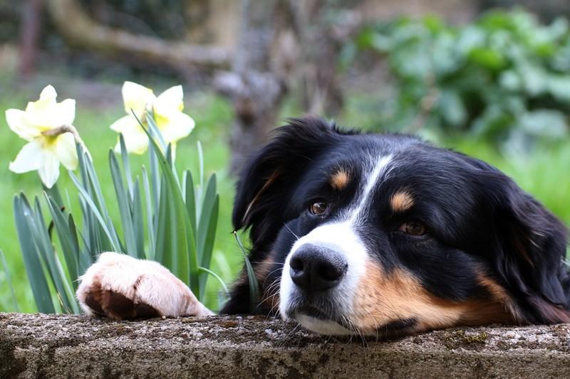 Des connaisseurs en chiens ?  - Page 5 Img_0315