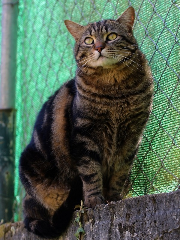 j ' adore mon chat !!! - Page 4 Img_1213
