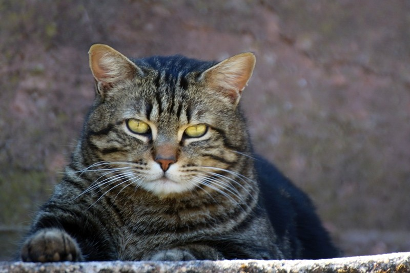 j ' adore mon chat !!! - Page 4 Img_1214