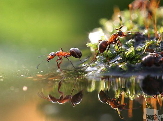Les tite fourmis :) Getima10