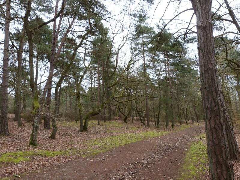 Forêt de Dourdan (91) P1230310