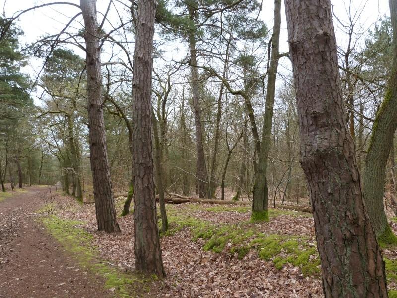 Forêt de Dourdan (91) P1230311