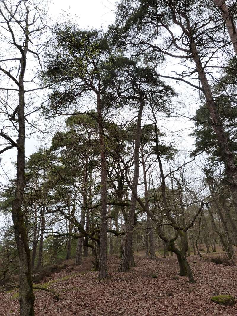 Forêt de Dourdan (91) P1230312