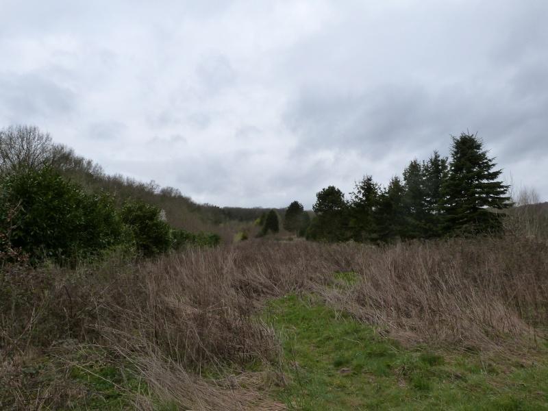 Forêt de Dourdan (91) P1230313