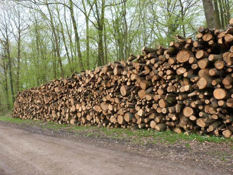 Forêt de Dourdan (91) P1230314