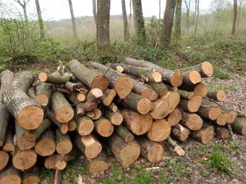 Forêt de Dourdan (91) P1230315