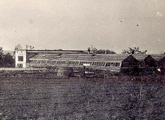 Vechi mestesuguri populare Zzz61910