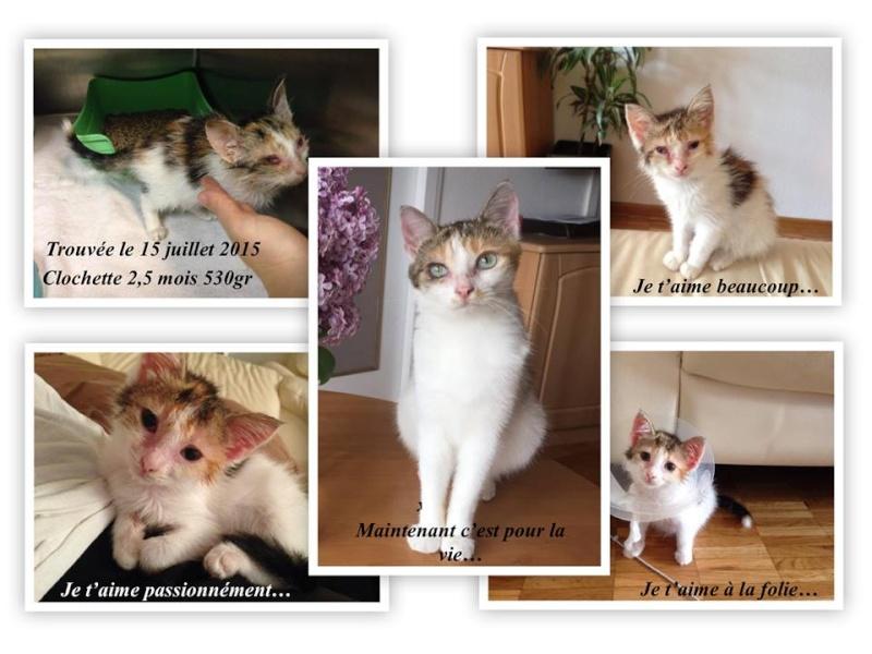 Album photos de la Fée CLochette - Page 4 11165210