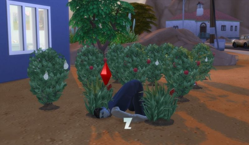 Olie Sirat: Solitary Sim Seeking Simoleons by EQ *Goal Completed* - Page 2 03-22-10