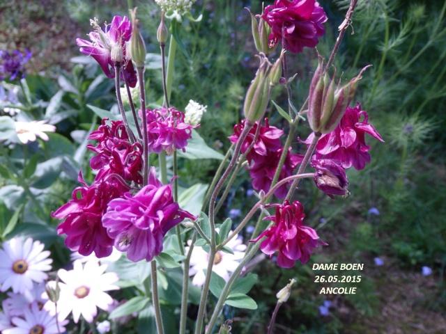 GALERIE  JHAZ- l'hiver et la famille - Page 2 P6170313