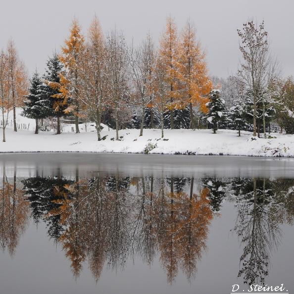 Hivernale des mille étangs 2020 20131210