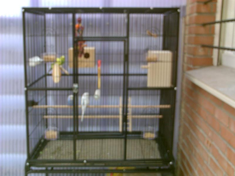 nouvelle cage Pict0026