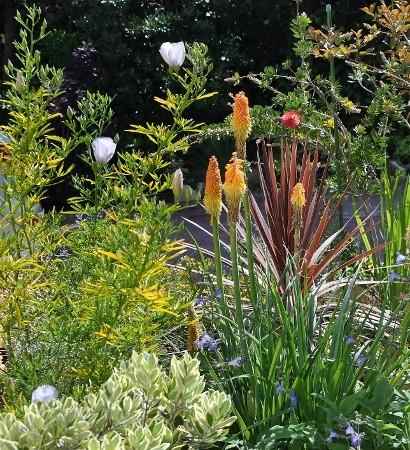 le joli mois de mai des fous jardiniers - Page 7 Jardin32