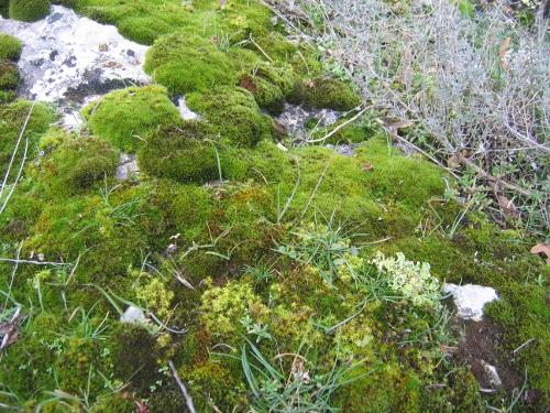 flore des vieux murs, rochers  et rocailles naturelles - Page 6 Nature11
