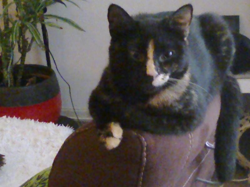 recherche personnes pouvant éduquer 3 chats timites mais gentils Photo012