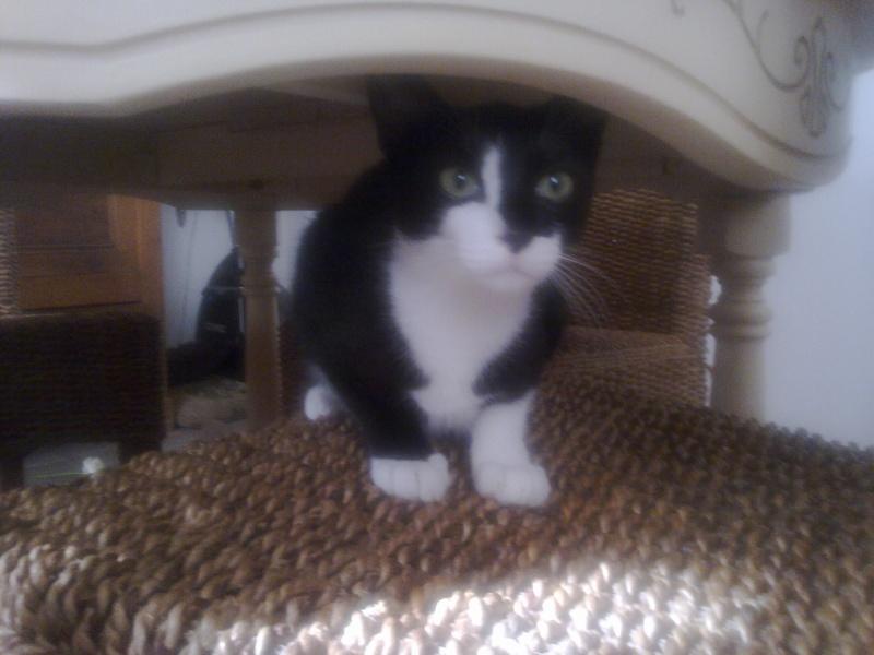 recherche personnes pouvant éduquer 3 chats timites mais gentils Photo014