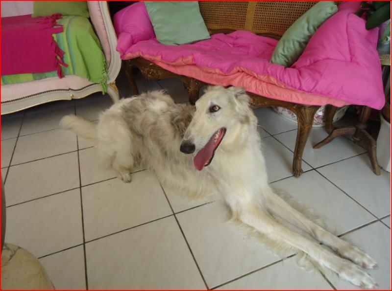 Notre beau et gentil duque de nouveau à l'adoption Adopté  - Page 3 Duque412
