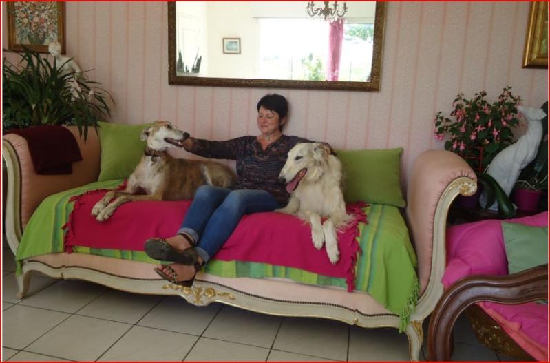 Notre beau et gentil duque de nouveau à l'adoption Adopté  - Page 3 Duque417