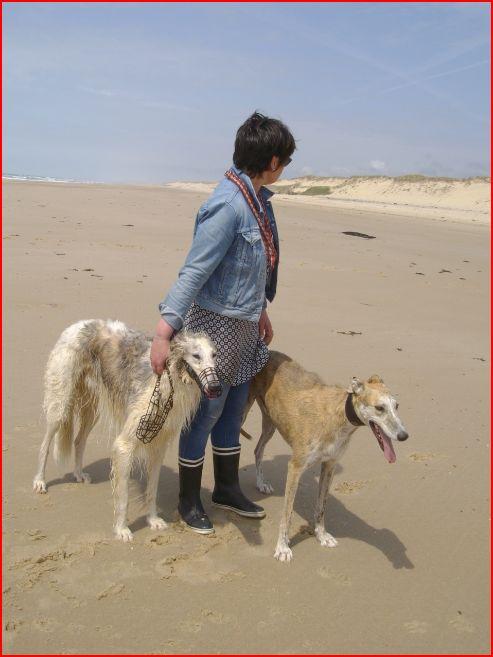 Notre beau et gentil duque de nouveau à l'adoption Adopté  - Page 5 Duque713