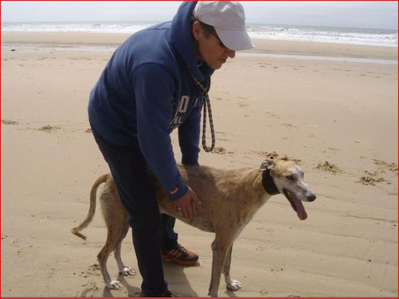 Notre beau et gentil duque de nouveau à l'adoption Adopté  - Page 5 Duque716