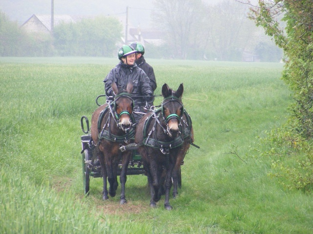 Mon projet d'attelage à 4 mules pas à pas ... - Page 3 11150710