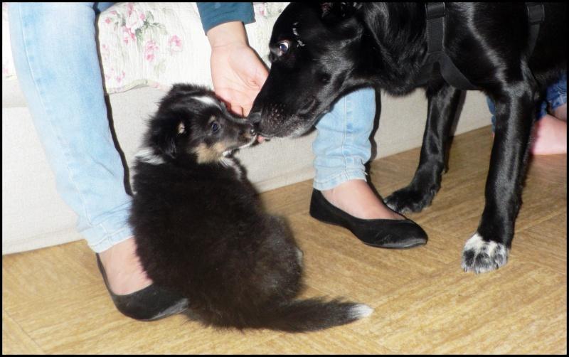 Black le croisé dingo et Galaxy la princesse souillon P1060210