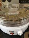 Chips aux feuilles de Kale Img_1211
