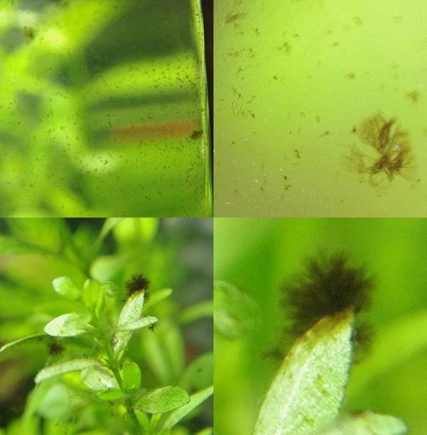 NanoCube 30 L planté Algues10
