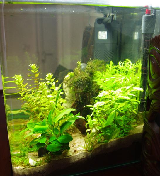 NanoCube 30 L planté Droite10