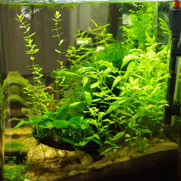 NanoCube 30 L planté Profil10