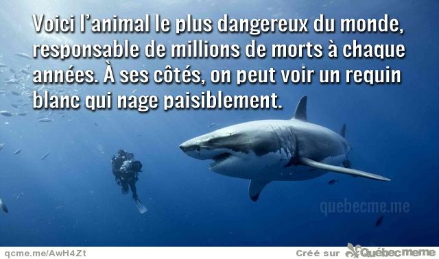 Les requins et vous Thumb_10