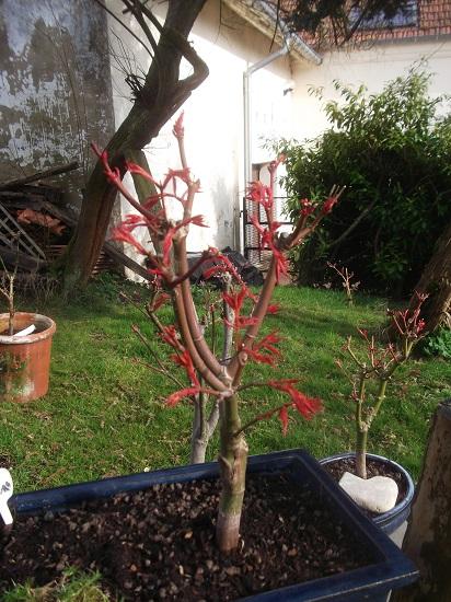 mes bonsaïs - Page 8 Dscf7119