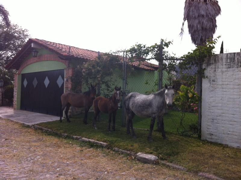 Everyday things Horses10