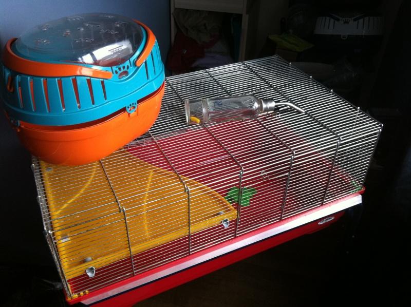 cage imac rat 80 Img_2410