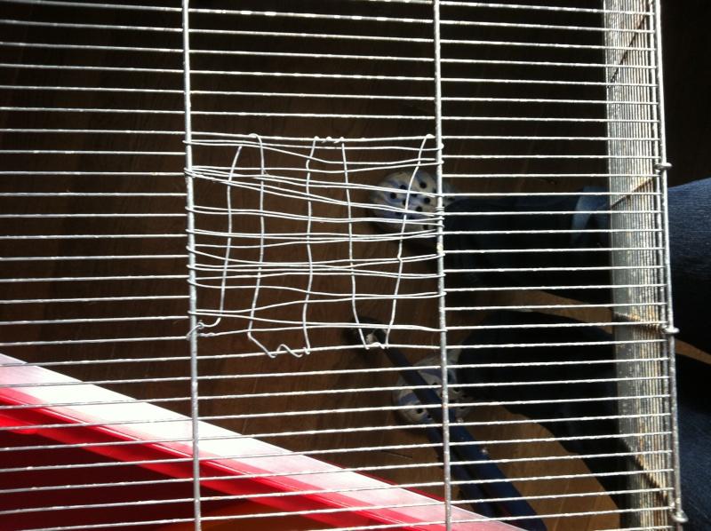 cage imac rat 80 Img_2411