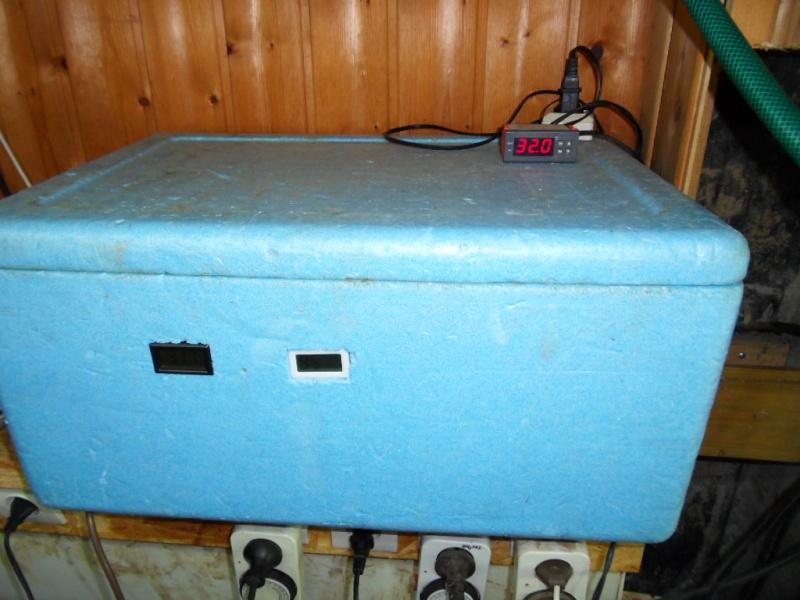 Incubateur oeufs de tortue  Sdc17518