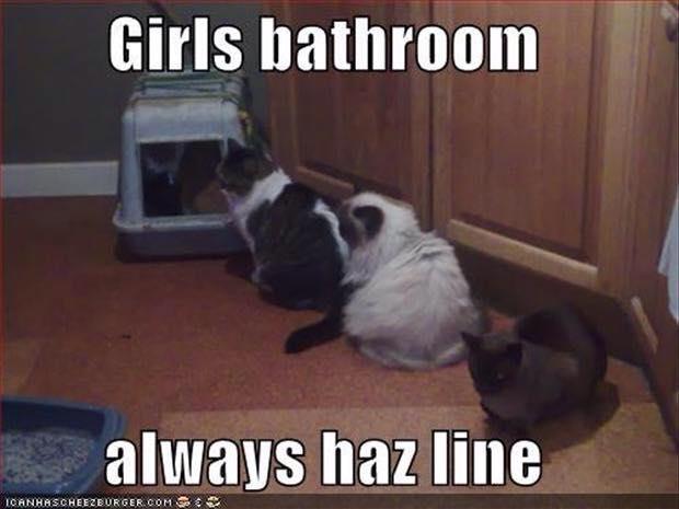 Images du jour sur les chats - Page 13 10660110