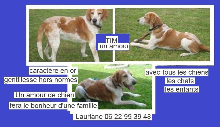 TIMm -  croisé épagneul/chien courant 12 ans - Association APPA65 (65) P10