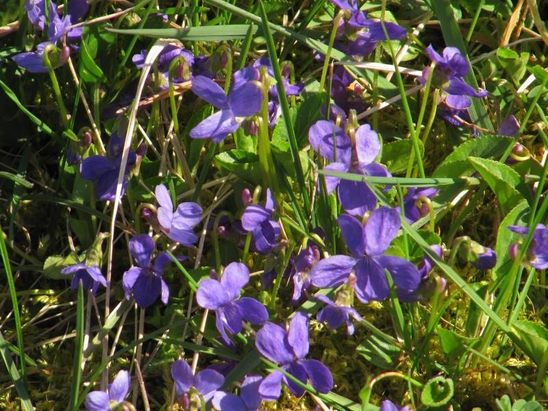 Bon Lundi Violet12