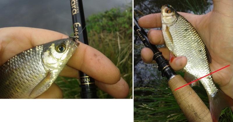 premier poisson Blanch13