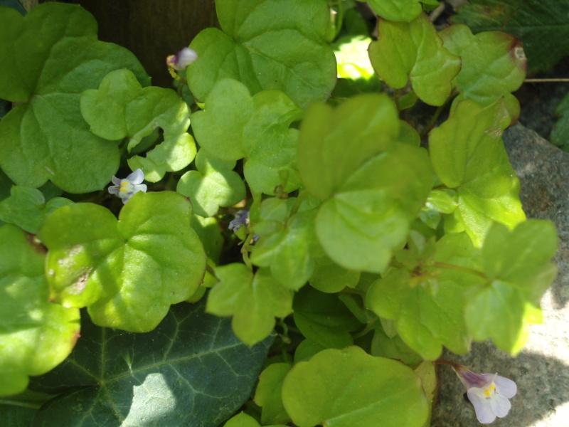 Reconnaitre les végétaux Dsc00012