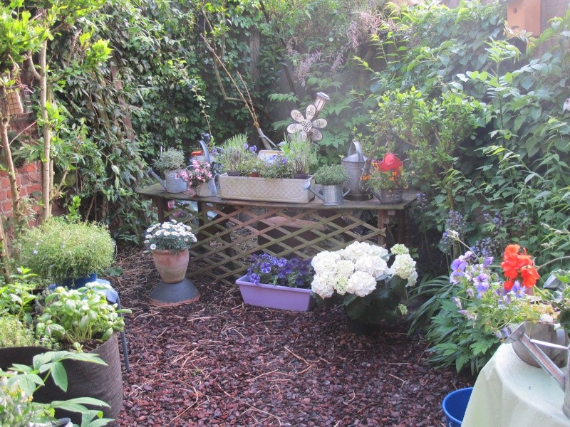 Mon jardin au printemps 2015 Jardin13