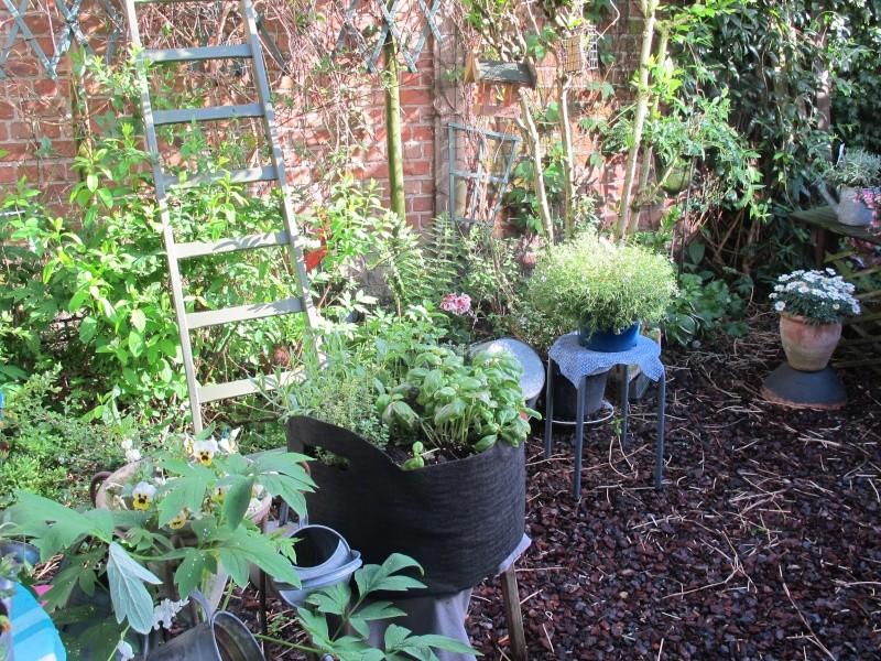 Mon jardin au printemps 2015 Jardin14