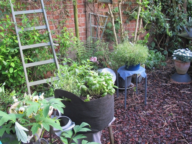 Mon jardin au printemps 2015 Jardin15