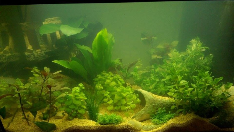 Plantes qui grandit trop vite 11103911
