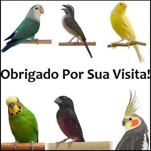 Curta nosso Facebook