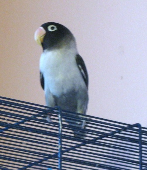 http://www.les-oiseaux-exotiques.com/f119-concours-beaute-autres- Img_0722